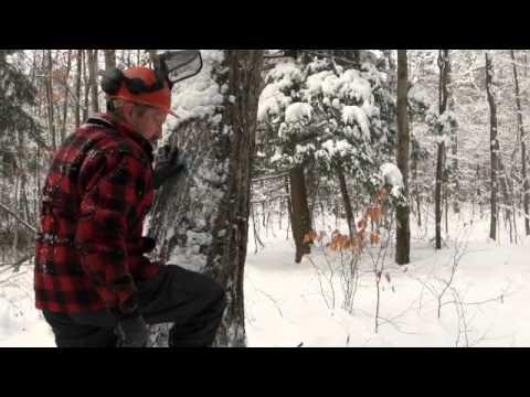 A Cut Above: Seeing the Forest und die Bäume in Jericho, Vermont
