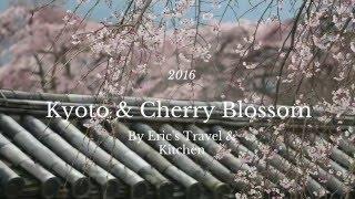 千年古都京都、櫻花