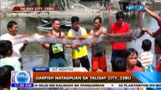 Talisay City (Cebu) Philippines  City new picture : Oarfish natagpuan sa Talisay City, Cebu