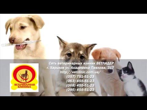 Level up с Дашей Капитановой Ветеринарная клиника ВЕТЛИДЕР (видео)