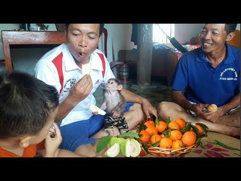 Baby Monkey  Doo Fun To Enjoy Fruits With Family - Funny Animals - Funny Animals
