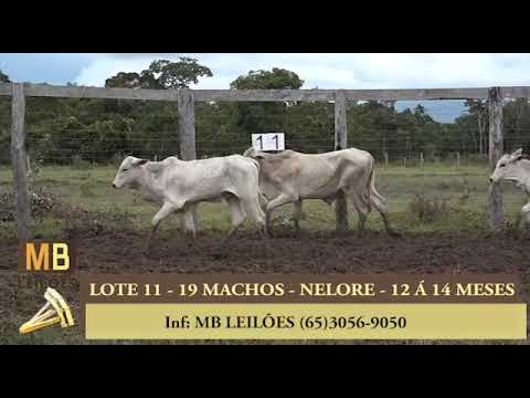 190º LEILÃO VIRTUAL MB LEILÕES