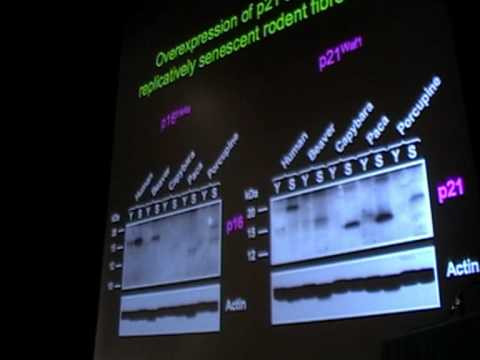 SENS4 – Evolution of Anticancer Mechanisms (2/3)