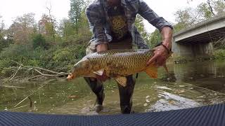 ALL FISH OVER 10 POUNDS+! Sight Fishing for GIANT Carp- 4K