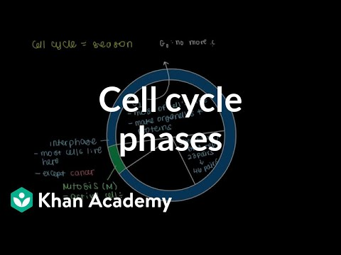 Cell Cycle Phases Video Cells Khan Academy