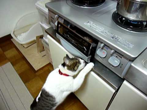 「[ペット]グリルの中の焼き魚が気になっちゃう猫だニャン」のイメージ