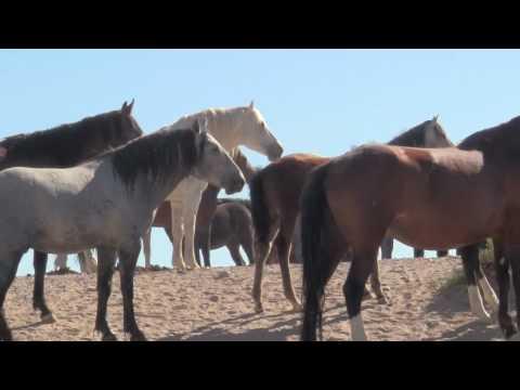 Utah's Wild Mustangs by Cris Draper