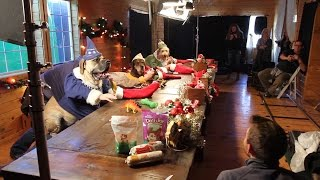 Santa's Elves - Dogs and Cats with Human Hands Making Toys - Freshpet Behind The Scenes