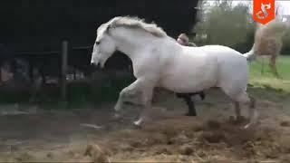 Dlaczego lepiej nie wkurzać konia. Ta dziewczyna szybko się o tym dowiedziała