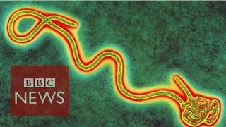Ebola:  Hunt For The Cure