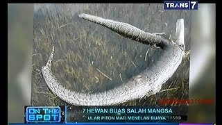 Video On The Spot - 7 Hewan Buas Salah Mangsa MP3, 3GP, MP4, WEBM, AVI, FLV Oktober 2018