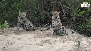 Hukumuri Female Leopard And Son - Presented By Liaan Lategan