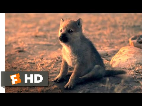 Alpha (2018) - Wolf Puppies Scene (10/10) | Movieclips