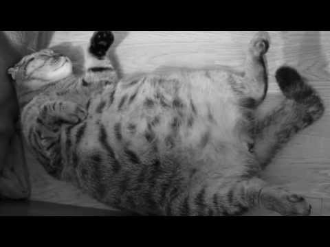 Sweetest pregnant cat ever + babies moving in the tummy (Suzie, the bomb cat)