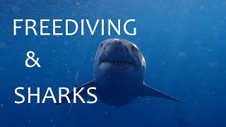 Meeting sharks in open water