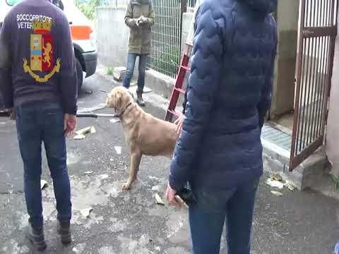 Cani abbandonati e maltrattati VIDEO