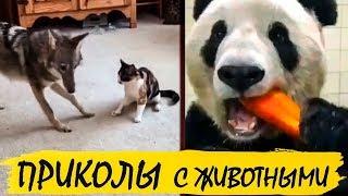 Приколы с животными, ржака, юмор, фейлы. Funny animals, lol, humor, fail