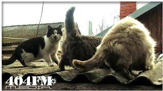Кошке любовь, а коту поесть важней! Cat to eat is more important