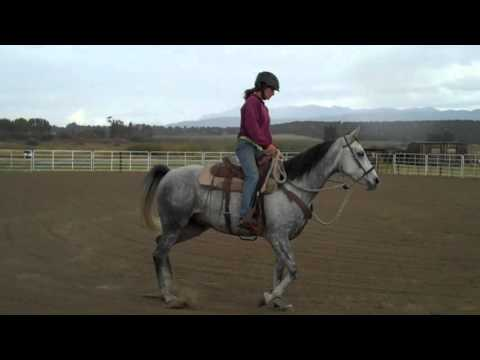 Duccati 2008 Arabian gelding Riding in bosal