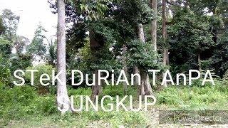 Video STeK DuRiAn TaNpA SuNGkUp (cuttings without hoods) MP3, 3GP, MP4, WEBM, AVI, FLV Juli 2018