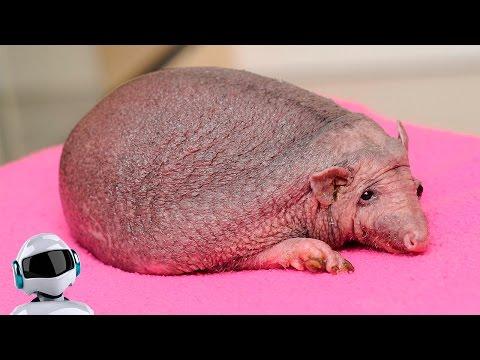 10 интересных фактов о животных которых ВЫ не знали