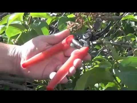 ComfortGEL Pruning Tools