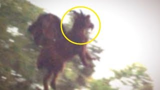 5 Most Mysterious Creatures Caught in America!Description:Huge swathes of America are still unexplored. While very few places are completely untouched by human presence we know most of the creatures found in the US. Some, however, still manage to elude us. We aim to show off some of our favourites with the 5 most mysterious creatures caught in America. Let's begin!5. Jersey Devil4. Black Bobcat, New Brunswick, Canada3. Alien Deer, California2. ??1. ???? Background Music: Kevin MacLeod (incompetech.com) Licensed under Creative Commons: By Attribution 3.0 License: https://creativecommons.org/licenses/by/3.0/For copyright matters please contact us: OfficialAmerikano@hotmail.comThank you so much for watching! Smash that like button for more, make sure you share the video with your friends and dont forget to subscribe!Make sure to follow me here:https://twitter.com/Top5sFinest