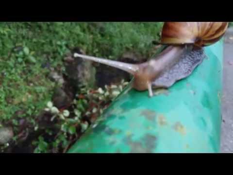 Alien Pluto- Summer Snail Moving slow Space River Creek