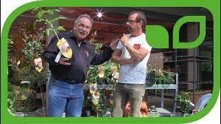 Karl Ploberger & Markus Kobelt im Gespräch über Brombeeren und Himbeeren