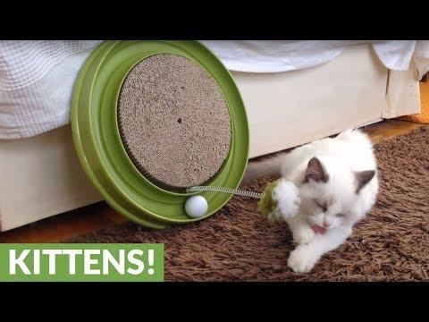 il-gattino-e-la-fisica