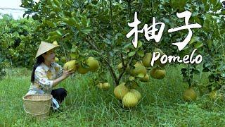 Autumn pomelos