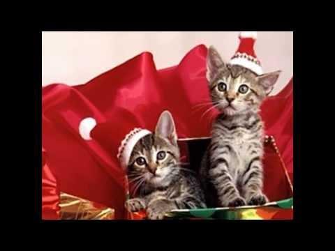 """gatti che cantano """"astro del ciel"""""""