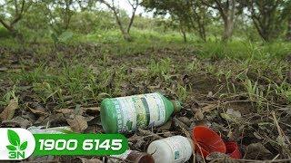 Trồng trọt | Lạm dụng thuốc trừ cỏ cho vườn cây ăn quả và những tác hại khôn lường