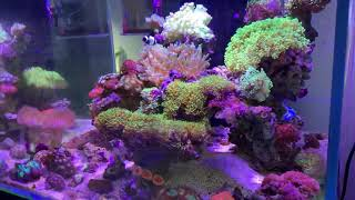 Bể cá cảnh biển 60x60x50cm tại phòng trưng bày Vietnam Aqua