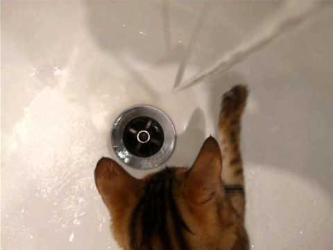 diy cat teaser toy