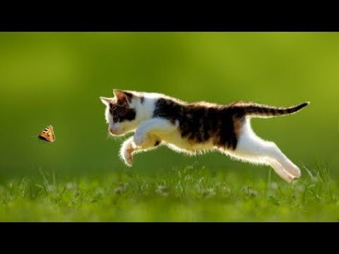 Cats Catching Butterflies - Cute Kitten And Funny Cat Videos Compilation 2018 [BEST OF]