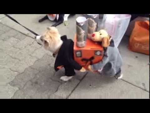 Two Dogs Carrying Present – SF Giants World Series Trophies