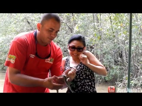Mangrove Boat Tour in Costa Rica! Day 3!