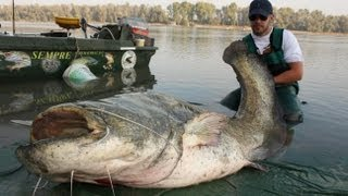 AWESOME MONSTER CATFISH - HD by CATFISHING WORLD