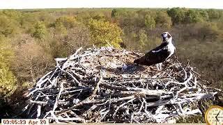 Download Lagu osprey France 180420111 Mp3