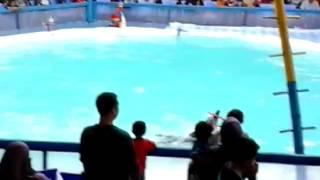 si lumba lumba Video