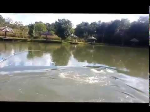 Surubim no antigo Lago 05