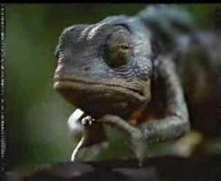 Budweiser Commercial - Frogs & Lizards - Ur One Sick Lizard
