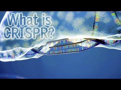 Intervista a Silvio Salvi UniBo | Una Buonissima Verza No OGM. Si, ma con il CRISPR