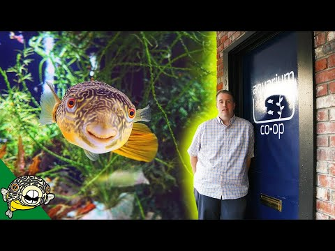 Aquarium Co-Op Store Tour! Old School Style._Akvárium. Heti legjobbak