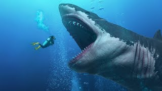 Video Did They Find a Living Megalodon In the Mariana Trench? MP3, 3GP, MP4, WEBM, AVI, FLV Juni 2019