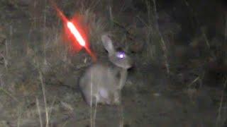 Video Bowhunting Rabbits NIGHT TIME MP3, 3GP, MP4, WEBM, AVI, FLV Juni 2017