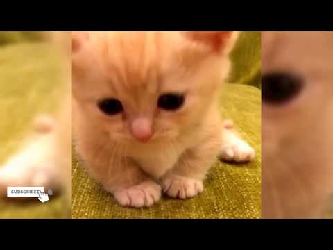 A Moment of Sweetness: Baby Cats Are the Cutest Cats