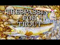 Trespassing for Trout ~ Large Flies & Large Browns On The Saugeen River