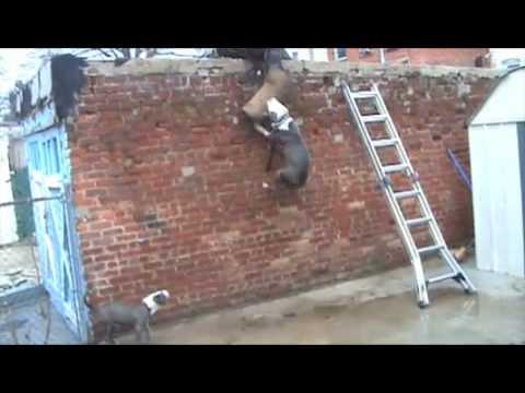 Brooklyn Blue Bullies (Full Force) (видео)